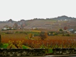 The vineyards of Lutry